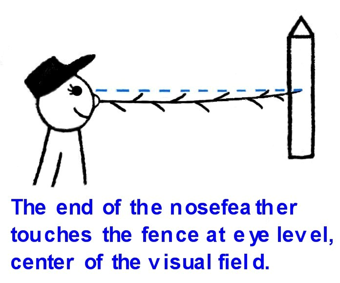 The_end_of_the_nosefeather_touches_the_fence_at_eye_level..jpg