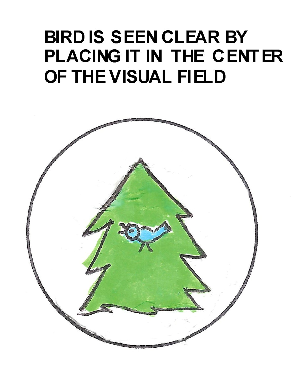 bird center of the visual field