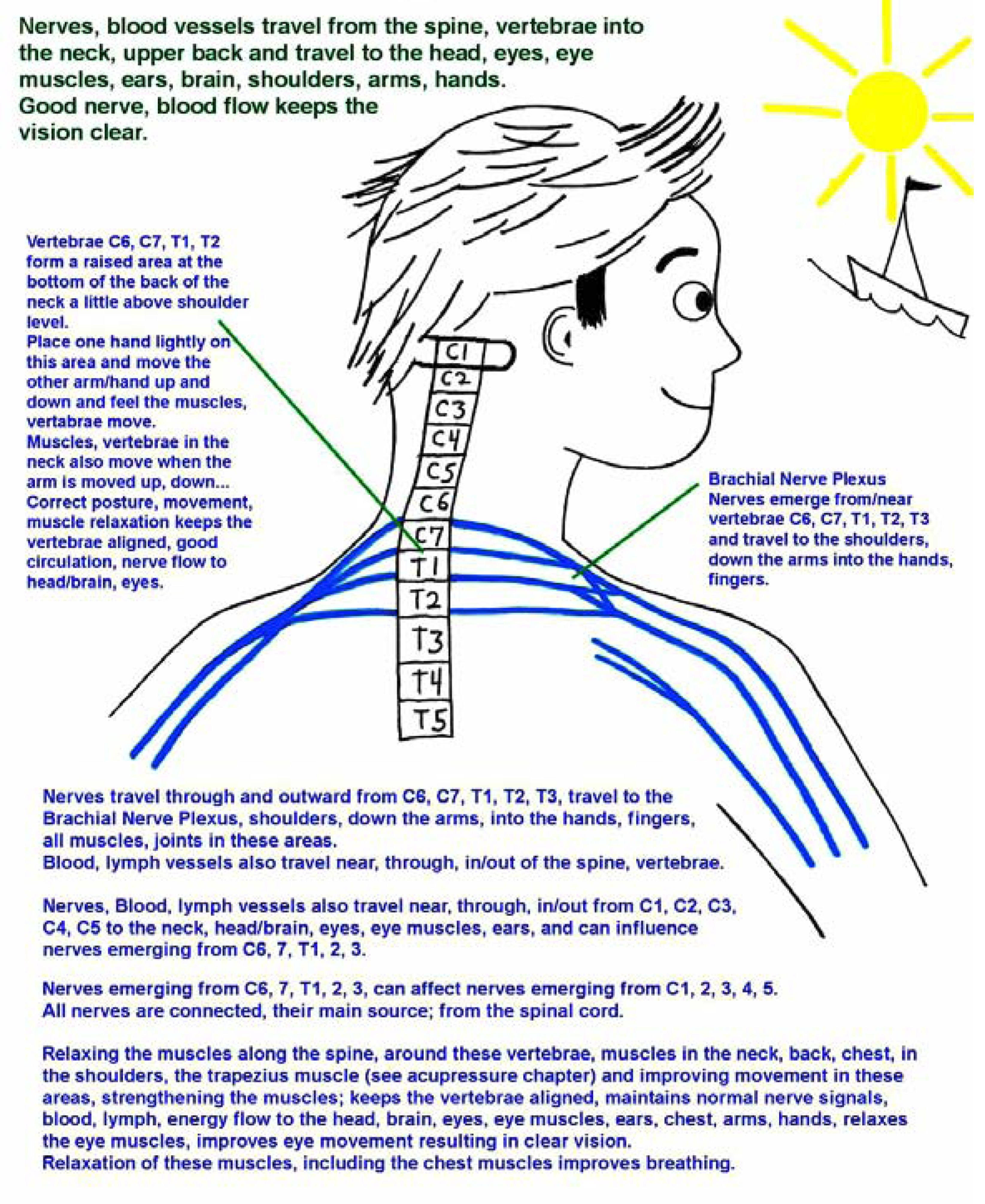 Physical Therapy For Relaxed Shoulders Neck Eye Muscles And